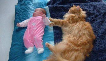 Кошки любят маленьких детей