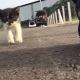 Какой смешной котенок