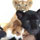 Собака, пантера и львенок – друзья навеки!