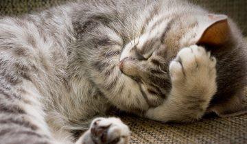 Как спят кошки? Самые мимишные ролики на тему кошачьего сна!
