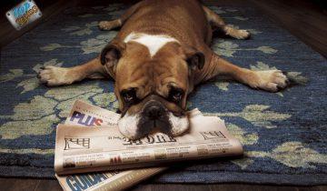 Встречайте, это самые ленивые собаки в мире!