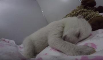 Что снится белым медвежатам?