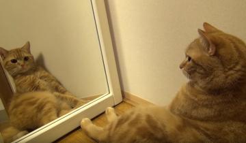 10 кошек и зеркало. Вы только посмотрите на их реакцию!
