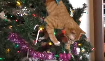 Ночь перед кошачьим Рождеством
