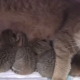 Две мамочки и 8 сыночков