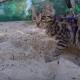 Котенок впервые увидел песок