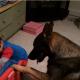 Собака укладывает ребенка спать