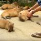 Экзотические животные, которых хочется тискать вечно