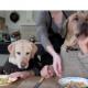 Собаки и их ужасные манеры за столом