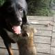 Собака и енот — лучшие друзья