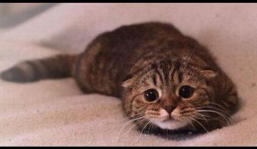 Чувство вины у кошек: невероятная подборка!