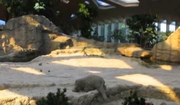 Любопытный слоненок попал в беду, что сделает его мама?