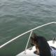 Пес, который хотел быть дельфином
