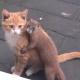 Кот и ласка – друзья не разлей вода!