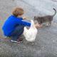 Мальчик играет с котом, но посмотрите, что делает курица!