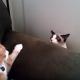 Подозрительные коты