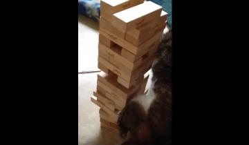 Играем в башню Дженга с котом
