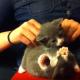 Котенку делают массаж