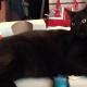 Как работать, когда кошки рядом?!