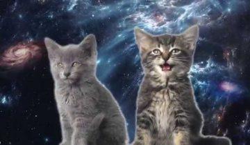 Кошки в космосе: удивительный ролик