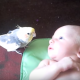 Попугайчик насвистывает малышу колыбельную