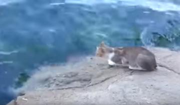 Бродячий кот выловил себе рыбку