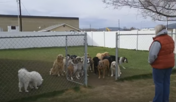 Посмотрите, как этих собак зовут на обед!