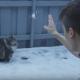 Вы когда-нибудь думали, что кошки обожают играть в снежки?