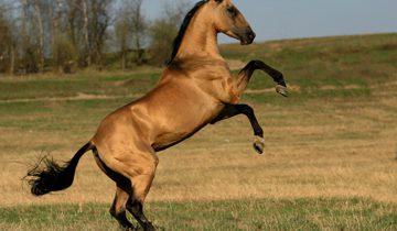 Когда хозяйка этой лошади начала танцевать, милое животное не сдержалось!