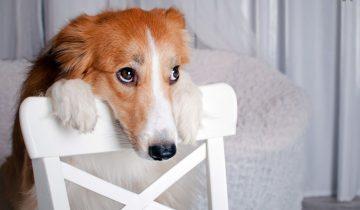 11 смешных виноватых собак