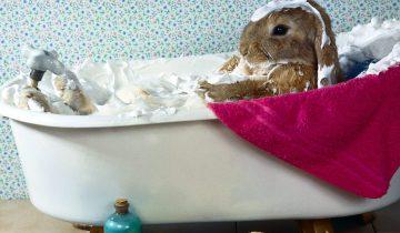Крольчонок купается в ванночке