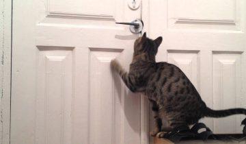 Кот открывает дверь для щенков