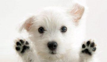 Собака превосходно чувствует ритм