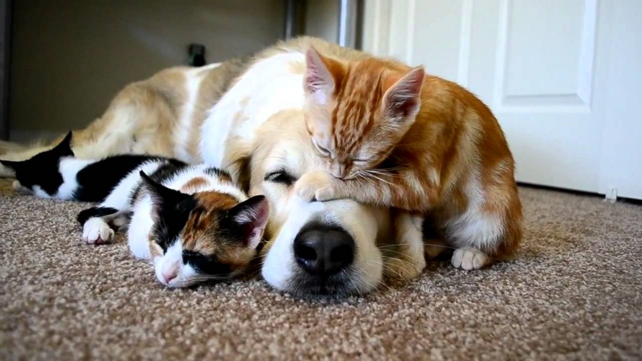астрономы, картинки собак и кошек забавные примеру, европейской