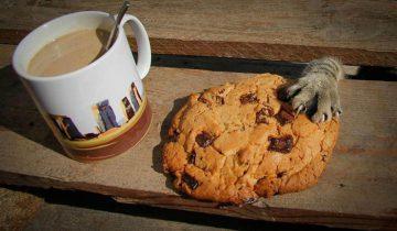 Почему кот ворует печенье?