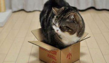 Невероятная битва за коробку
