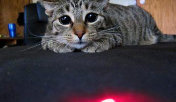 Реакция животных на лазер