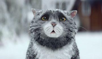 Сказка о кошке, которая натворила чудес