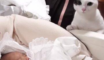 Кошка знакомится с младенцем