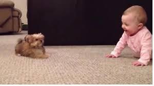 Песик очень сильно хочет поиграть с малышом