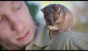 В австралийском заповеднике кроха-опоссум подружился со смотрителем