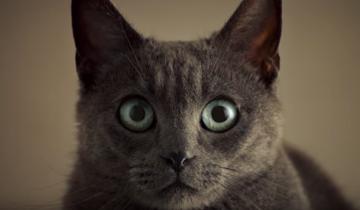 Кот испортил романтический вечер в рекламе Sheba