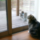 Японские макаки и Мару