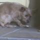 Заброшенная собака спасена