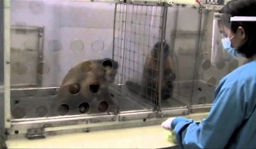 Реакция обезьян на несправедливость