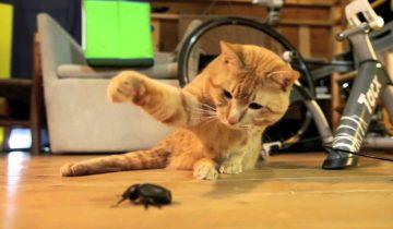 Кошки против насекомых