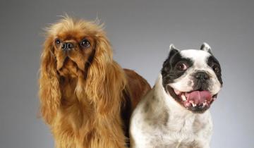Пока хозяева отвлеклись, две собаки распотрошили упаковку с лакомством