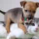 Каждая уважающая себя собака должна хоть раз в жизни погонять кошек
