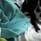 Пес боится отнять мячик у кота