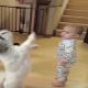 Малыш копирует собаку
